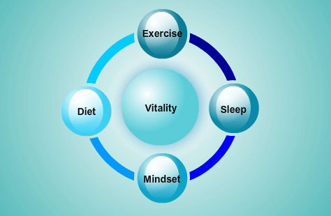lifestyle-vitality-health-wellness-the-four-spokes-on-the-wheel-of-life