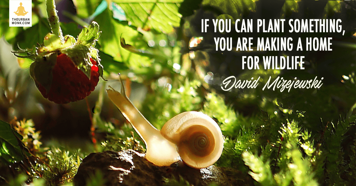 If You Can Plant Something You Are Making A Home For Wildlife - @Dmizejewski via @PedramShojai