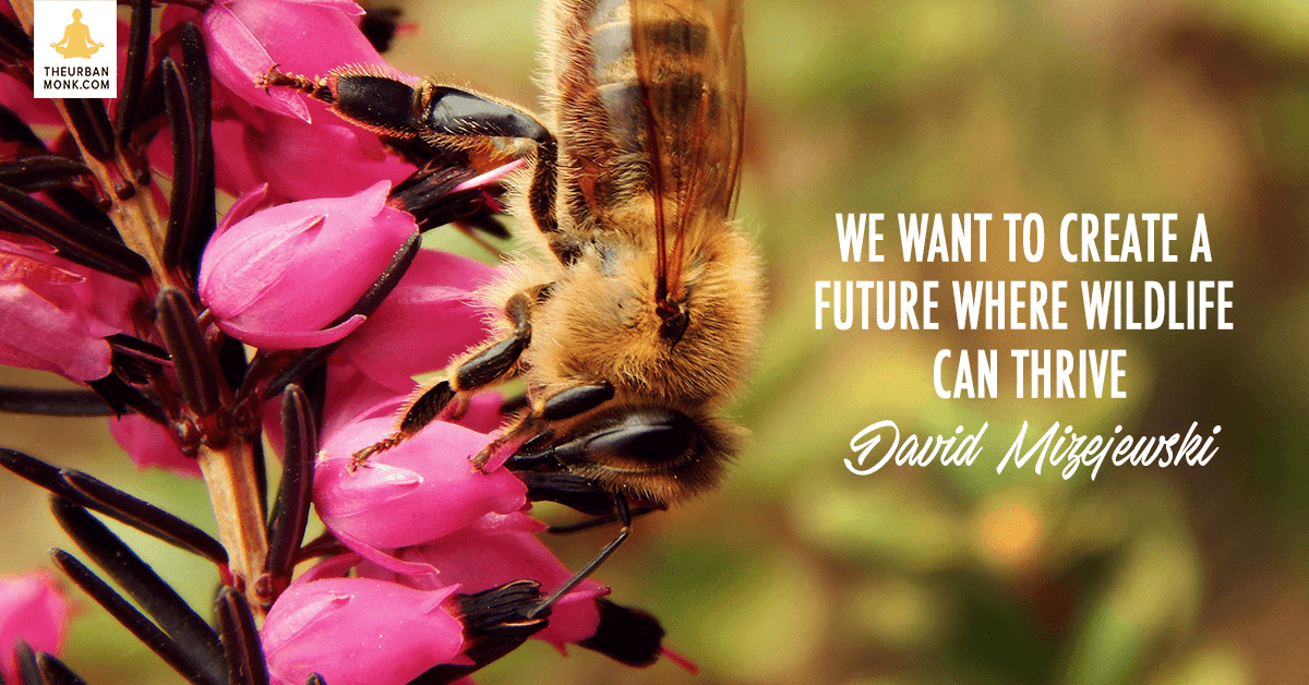 We Want To Create A Future Where Wildlife Can Thrive - @Dmizejewski via @PedramShojai